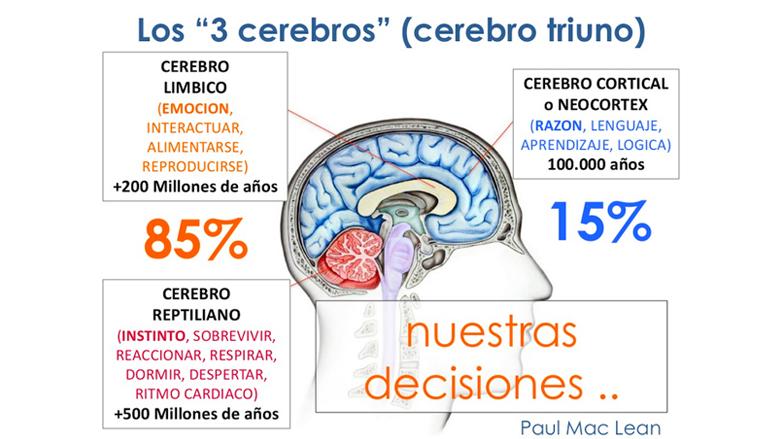El fantástico cerebro triuno