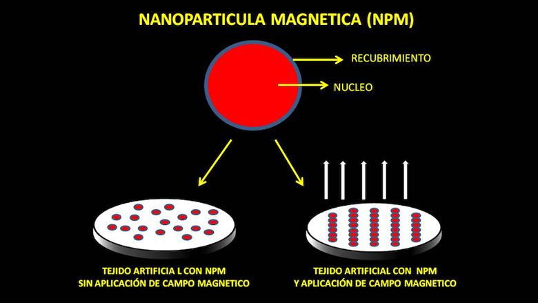 Tejidos magnéticos inteligentes en terapias regenerativas